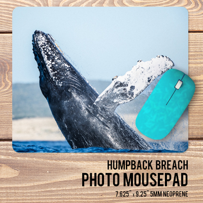 Select a sea life image to create your personalized photo gift.